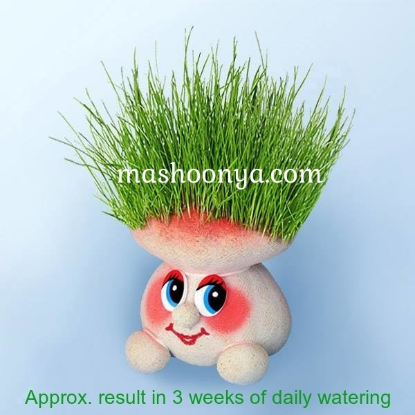 "Grass Head ""Agaric Mushroom"" with Grass"