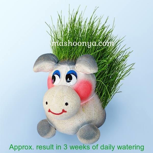 "Grass Head ""Burro"" with Grass"