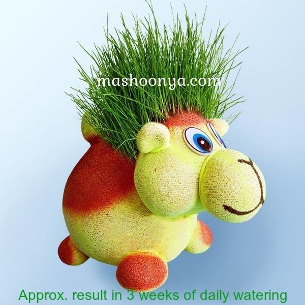 """Grass Head """"Camel"""" with Grass"""