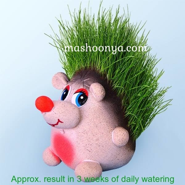 "Grass Head ""Hedgehog"" with Grass"